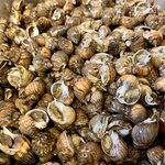Lumache di mare