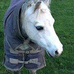 Cute Friendly Pony.