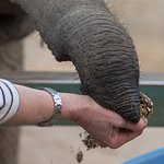 Elephant Keeper for the Day - Such a wonderful experience