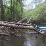 water snake sunning on branch