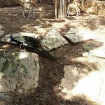 Limassol Zoo-billede