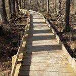 Boardwalk on Tecumseh trail