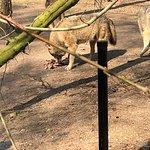 Fotografia de Ouwehands Zoo Rhenen