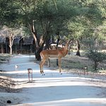 Wildlife take the path too.