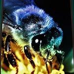 Projektion von Insekten