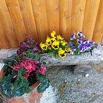 Η ταβέρνα μας,με τα λουλούδια της..