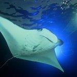 Manta Ray Night Snorkel: Big Island, Hawaii