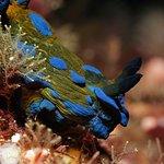 从沃克沃斯到山羊岛海洋保护区的全日水肺潜水宪章