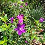The Secret Garden Utama – fotografija