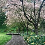 Beautiful sights in Washington Park in spring