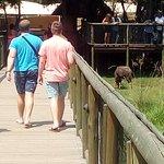Lion Park Safari