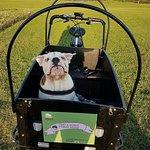 Peas & Honeys egen Cykel som drar runt på Pubhunden