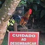 Photo de Restaurante Vento Serrano