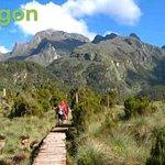 Mountain elgon