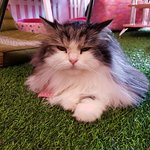 Photo de Neko Cat Cafe Phuket