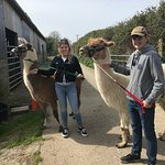 Llama Lland Photo
