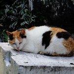 Cat Village Houtong Φωτογραφία