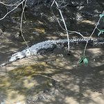 Lots of crocodile sitings on the river tour!
