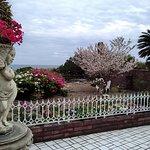 カフェパノラマの玄関から見た庭の眺めです。
