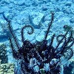 Best dive site Mun Island