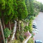 部屋から見た百年杉庭園