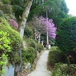 百年杉庭園の入口付近の道。神社の鳥居が見えてきました。