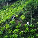 Birding Atitlan Expeditions照片