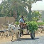 Valokuva: Real Egypt Tours