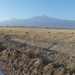 Amboseli - Löwenfamilie