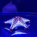 Музей медуз