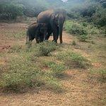 Yala Safari
