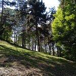 Bosque a los pies del monte