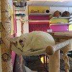 Bilde fra Zur Mieze Katzenmusik Cafe