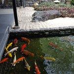 Koi Pond with carefully raked gardens