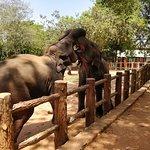 Pearly Gates Lanka张图片