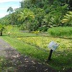 Vaipahi Water garden