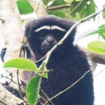 Hoollongapar Gibbon Sanctuary Photo