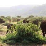 Elephant in Tarangire national parks.