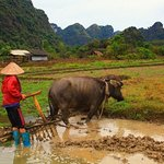 farmer in Viet Hai village