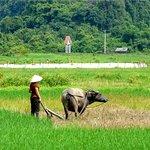 rice field in Viet Hai