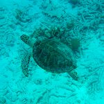 Turtle on the snorkeling tour!