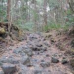 hardened lava formation