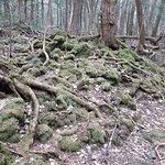 Interesting trees, vegetation