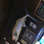 The fish over the bar!