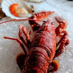 Lazy Lobster