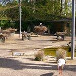 Le parc à cigogne