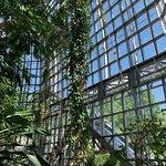 Inside the botanical house