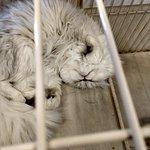Bilde fra Moff Animal World