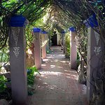 Vine covered walkway