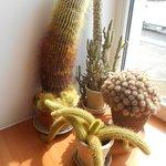 Kaktusutsmyckning vid ett fönsterbord.